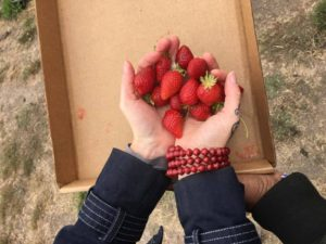 giving strawberries